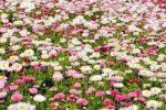 flowers-275971_1920 (1)